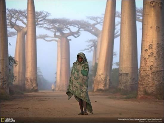 pokok-baobab-madagascar