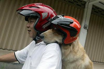 Corresponder al amor del perro