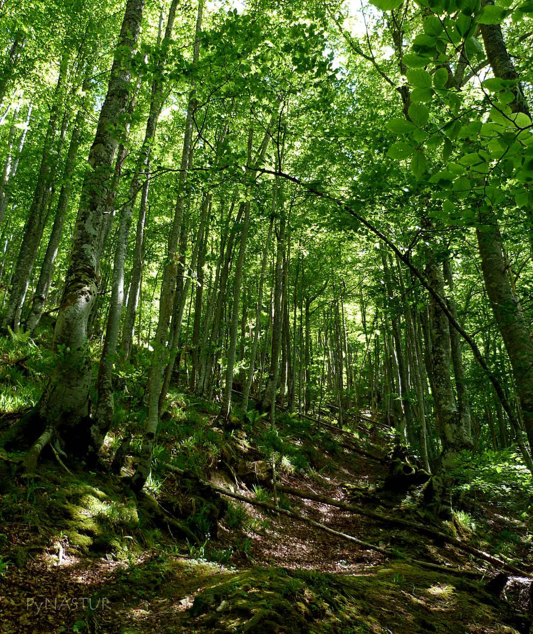 Bosque de Lindes - Asturias