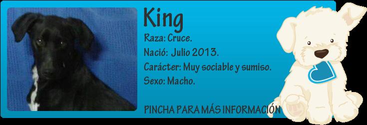 http://mirada-animal-toledo.blogspot.com.es/2014/02/king-abandonado-la-puerta-de-un-chalet.html
