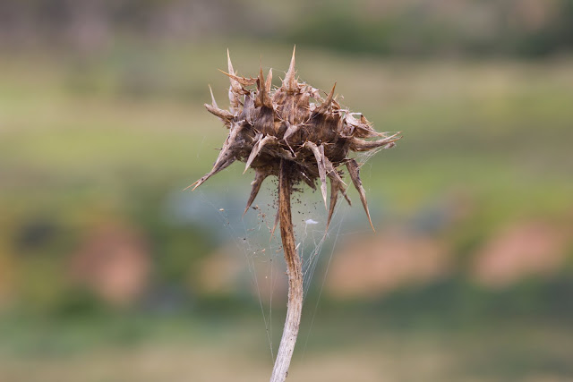 dried plant covered in cobwebs
