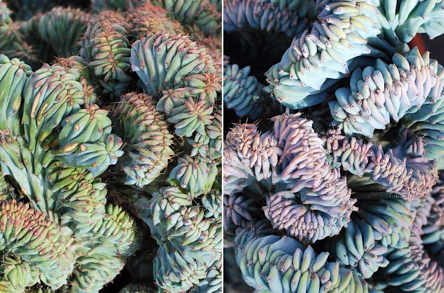 Succulent and Cactus Collage