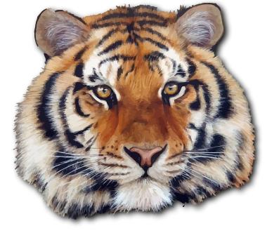 hd animals tiger face vector