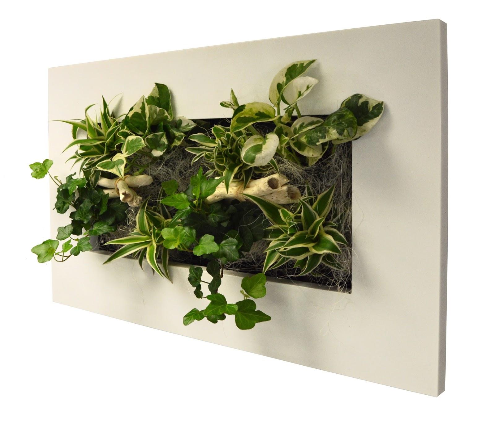 Meu pomar vasos criativos para inovar na sua casa - Cadre vegetal mural ...