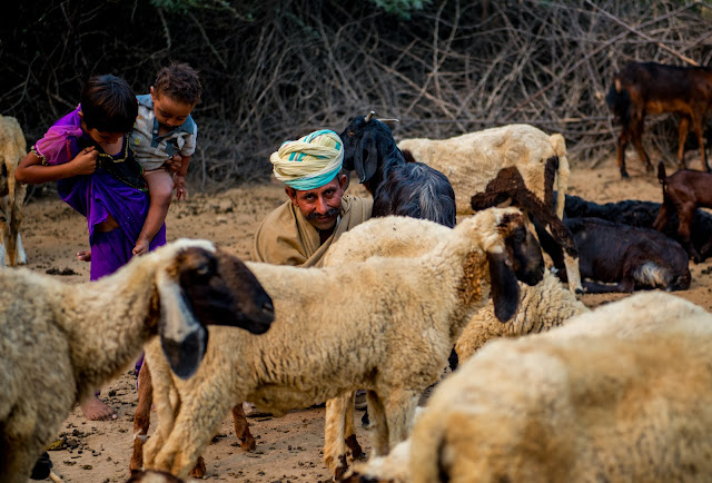 A goat shepherd and his two children milking their goat on their small village farm in Rajasthan, India