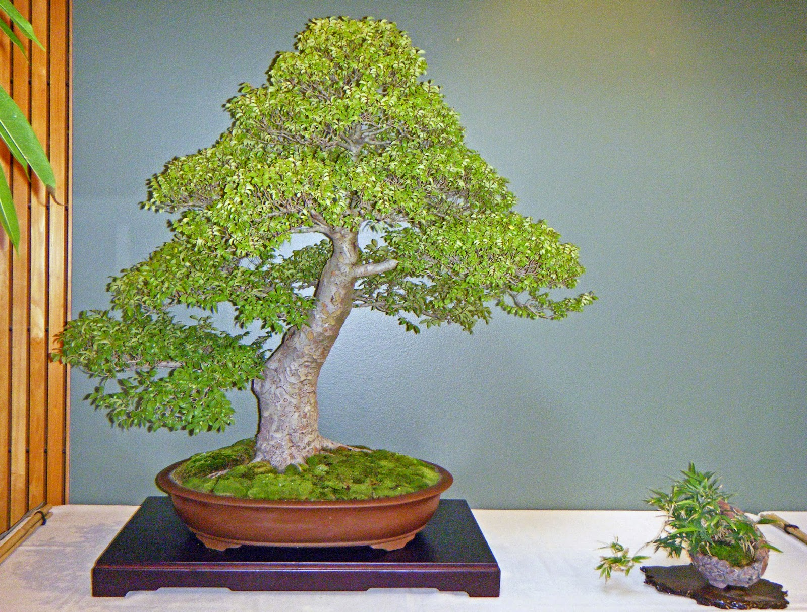 Bonsai In Hoosierland Mid America Bonsai Show 2014 Part 5 Some