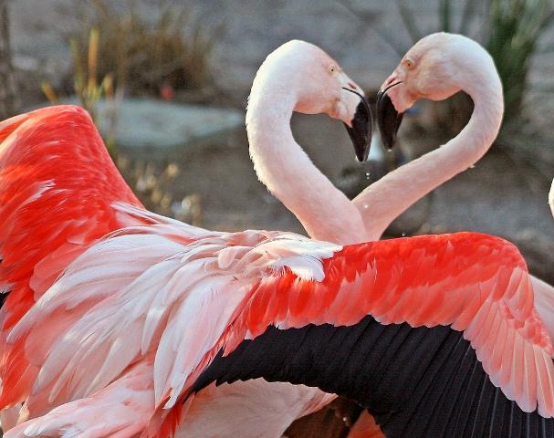 pink flamingo 1 birds - photo #21
