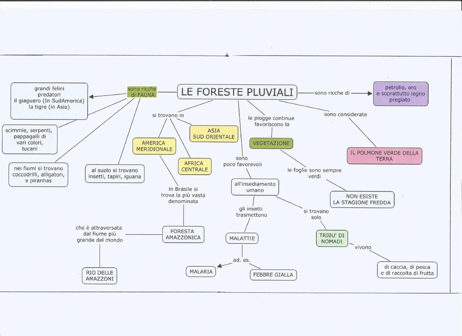 Mappe concettuali foreste pluviali e savana for Pianta della foresta di pioppo
