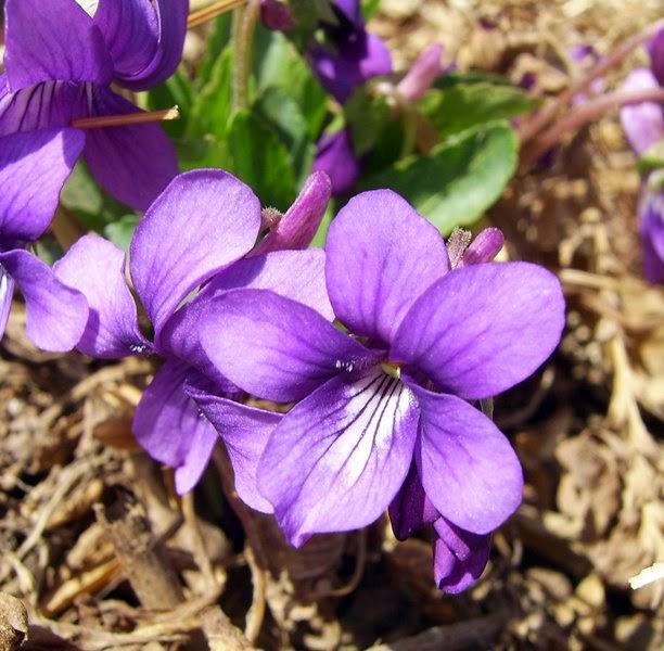 10 loài hoa phụ nữ yêu thích nhất 10
