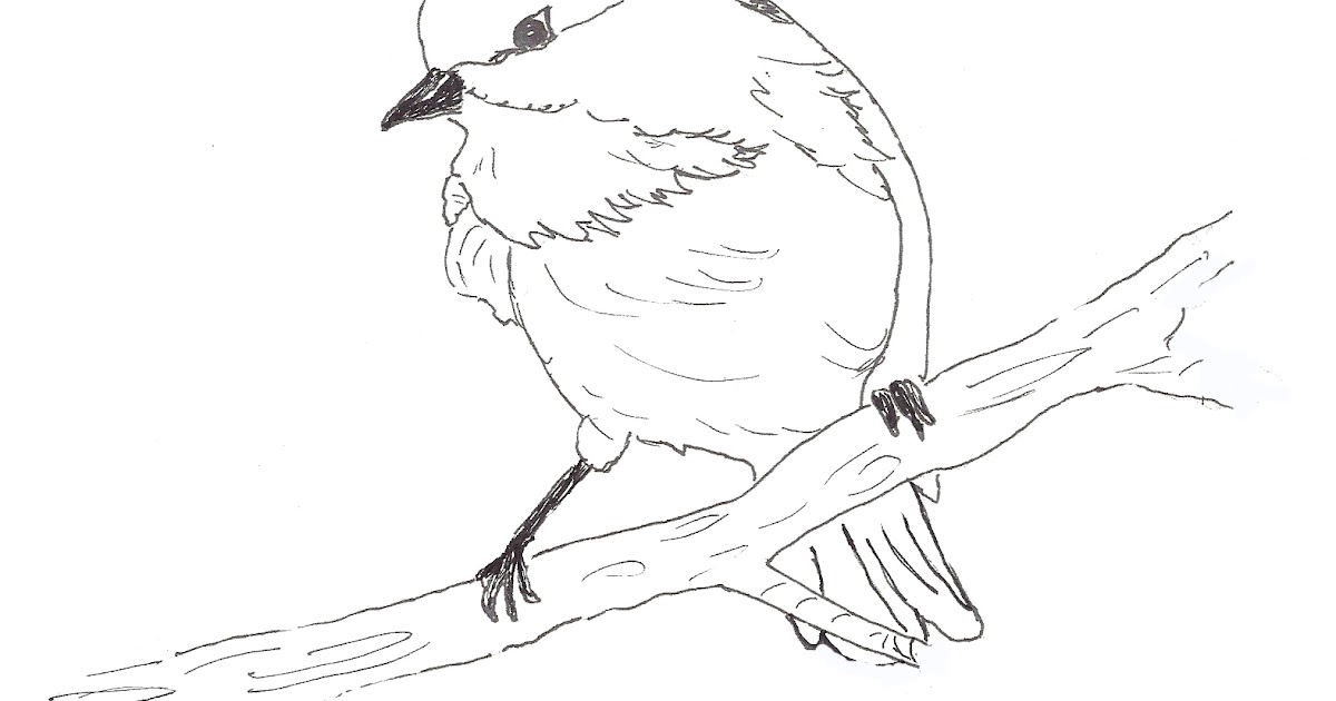 chickadee bird coloring pages - photo#11