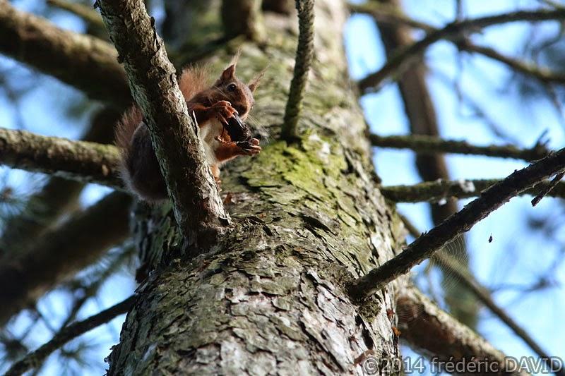animaux nature écureuil pomme de pin Sorques Seine-et-Marne