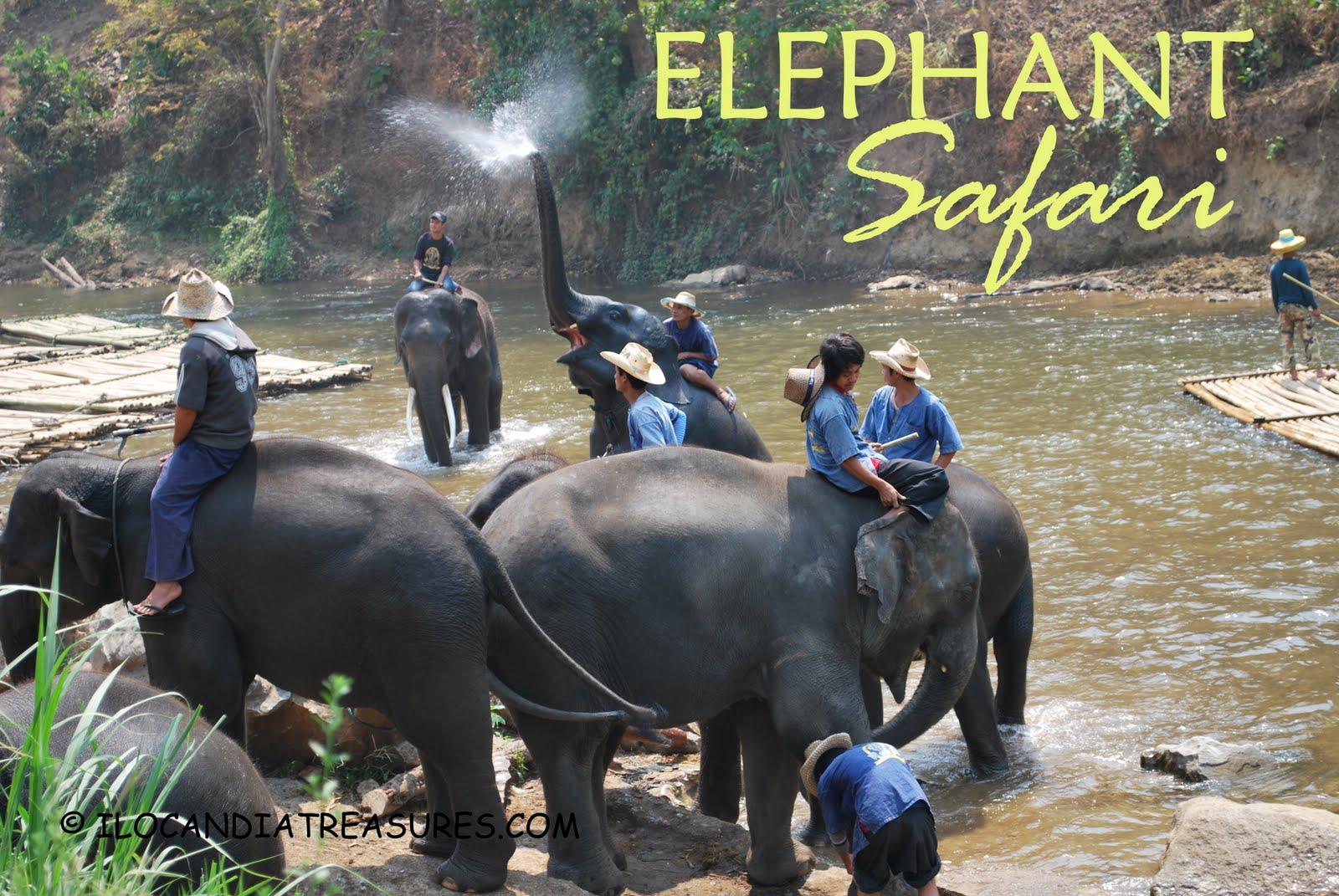 treasures of ilocandia and the world an elephant safari in thailand