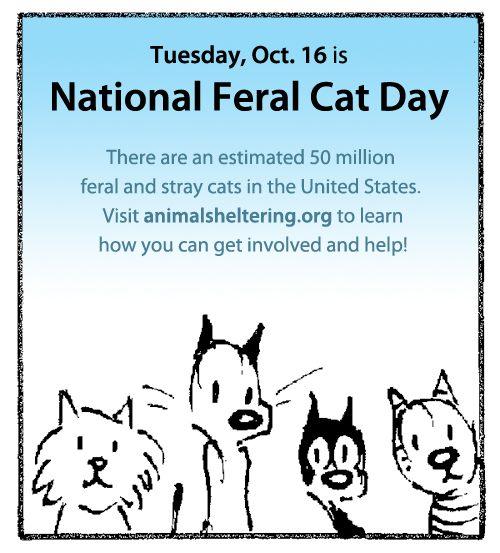 Adopt A Feral Cat In Nyc