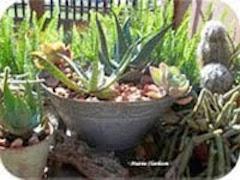 My Vetplantversameling