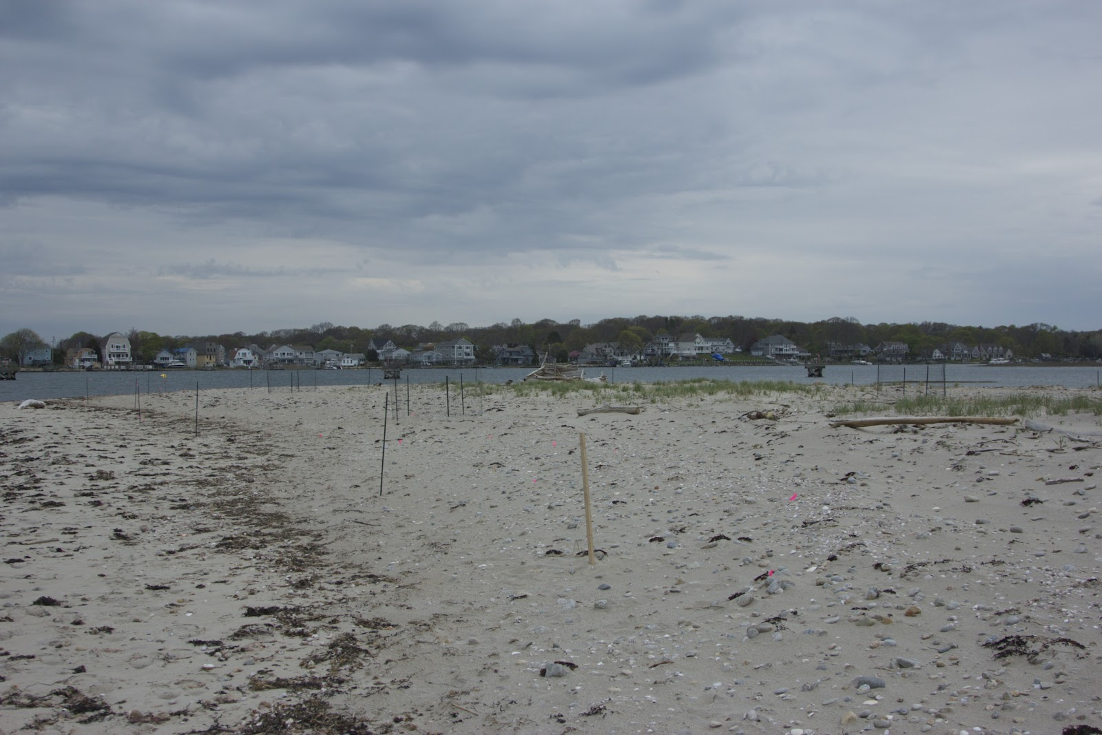 How to Set Up a Beach Exclosure to Protect Shorebirds