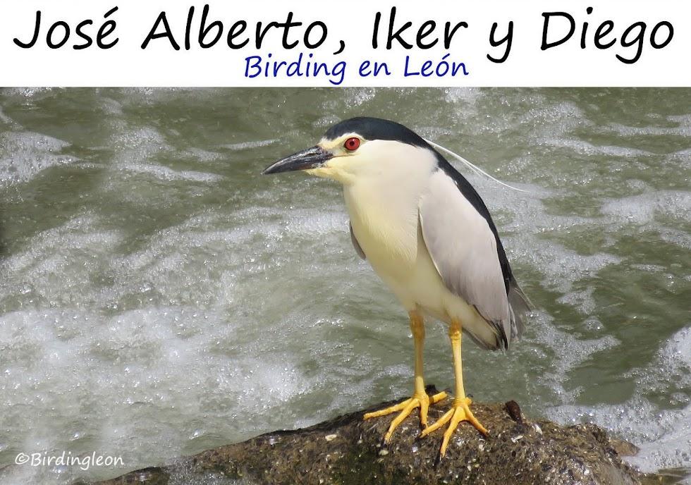 JOSE ALBERTO, IKER y DIEGO Birding en León
