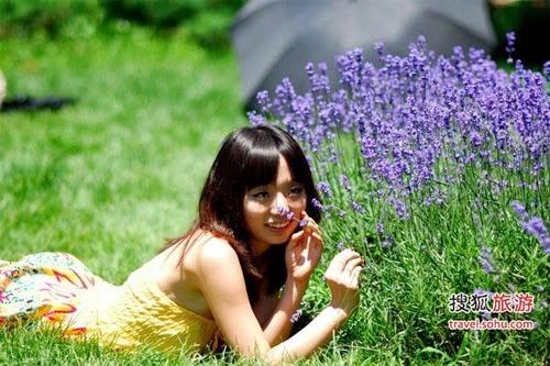 Tên tiếng Anh của hoa oải hương