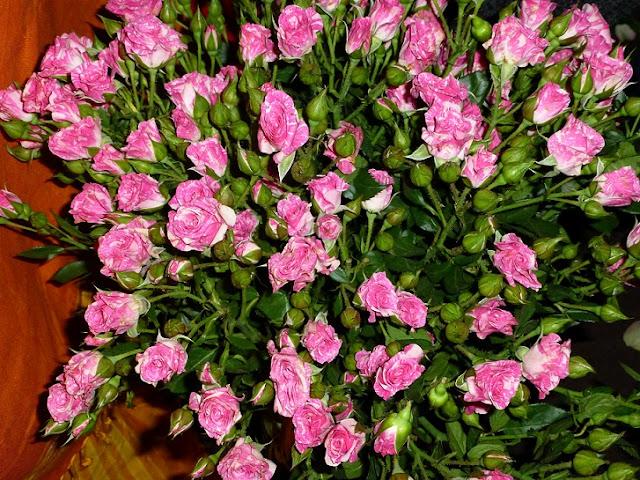 Kenya-roses-pink-white
