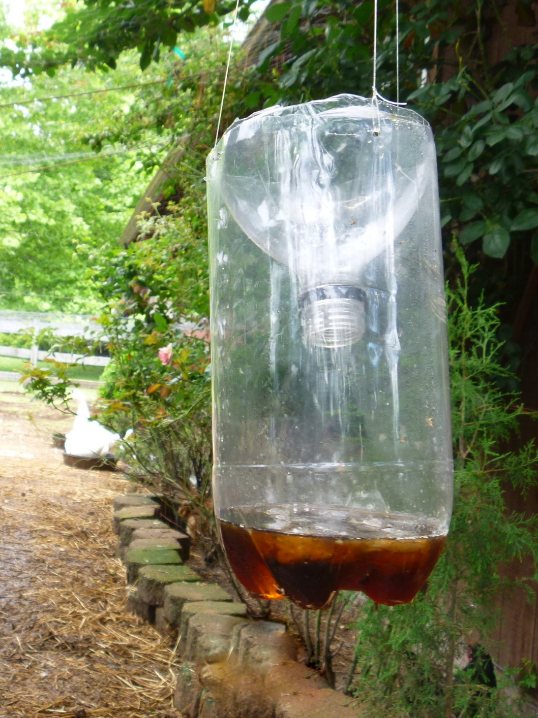 got flies make this easy diy fly catcher out of a soda bottle fresh eggs daily. Black Bedroom Furniture Sets. Home Design Ideas