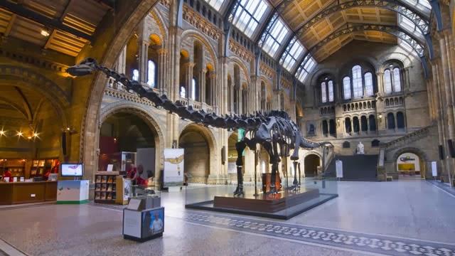 Dinosaur fossils britain