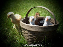 ~ Basket Of Peeps ~