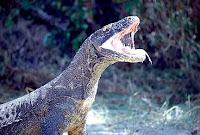 reptil venenoso