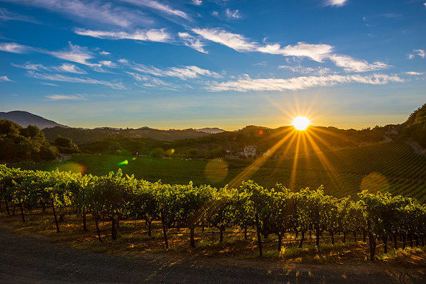 Napa Valley is looking great right now.