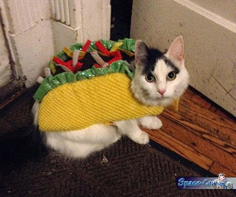 funny cat costume picture
