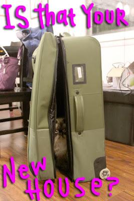 Goma_suitcase_01