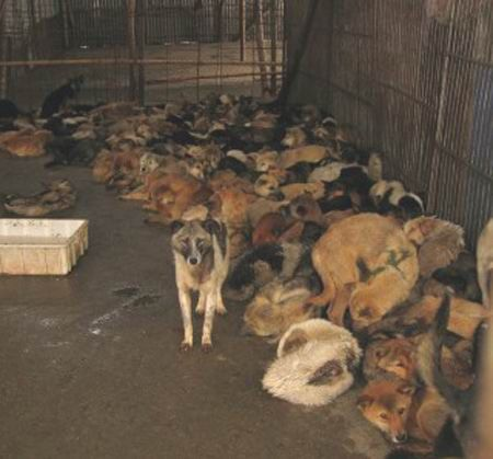 help a romanian stray public shelters amp corruption