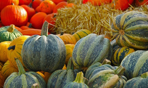 healthy holiday pumpkins