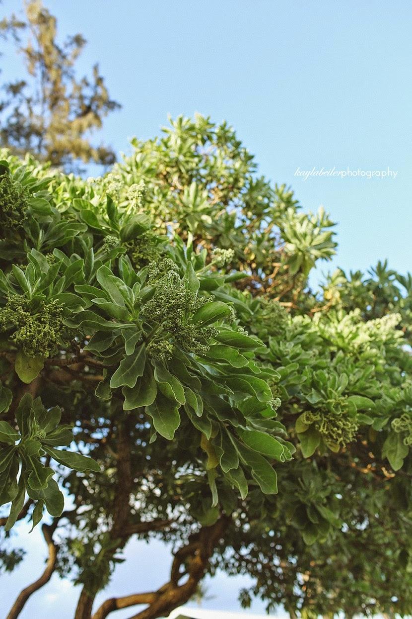 trees plants kauai