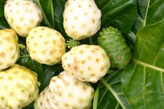 We can find a lot of Noni fruit in Asia, India and the islands in the Pacific and East Indies Islands.