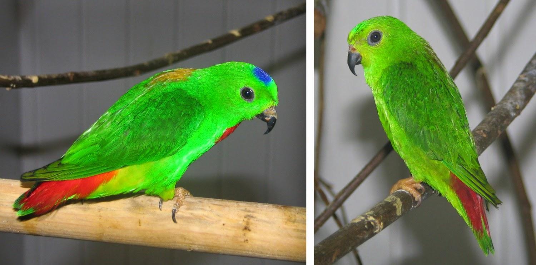 Gambar Cara Merawat Burung Palek