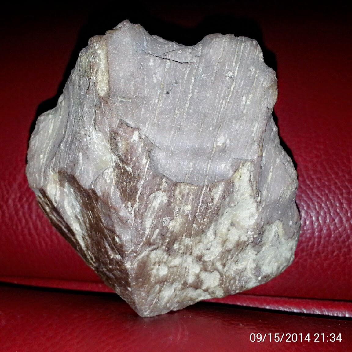 Jati Wood Fossil