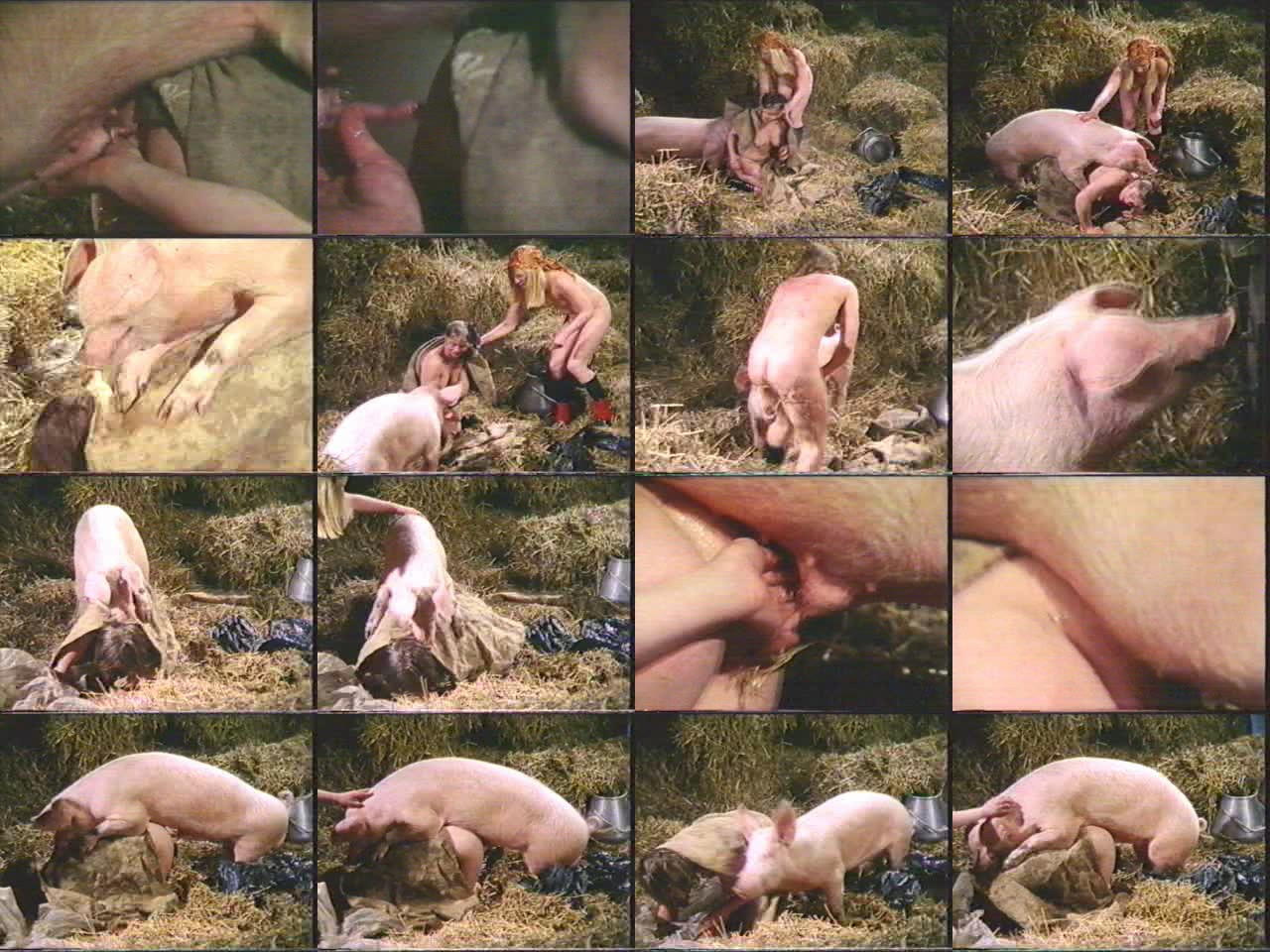 Woman fuck with pig erotica video