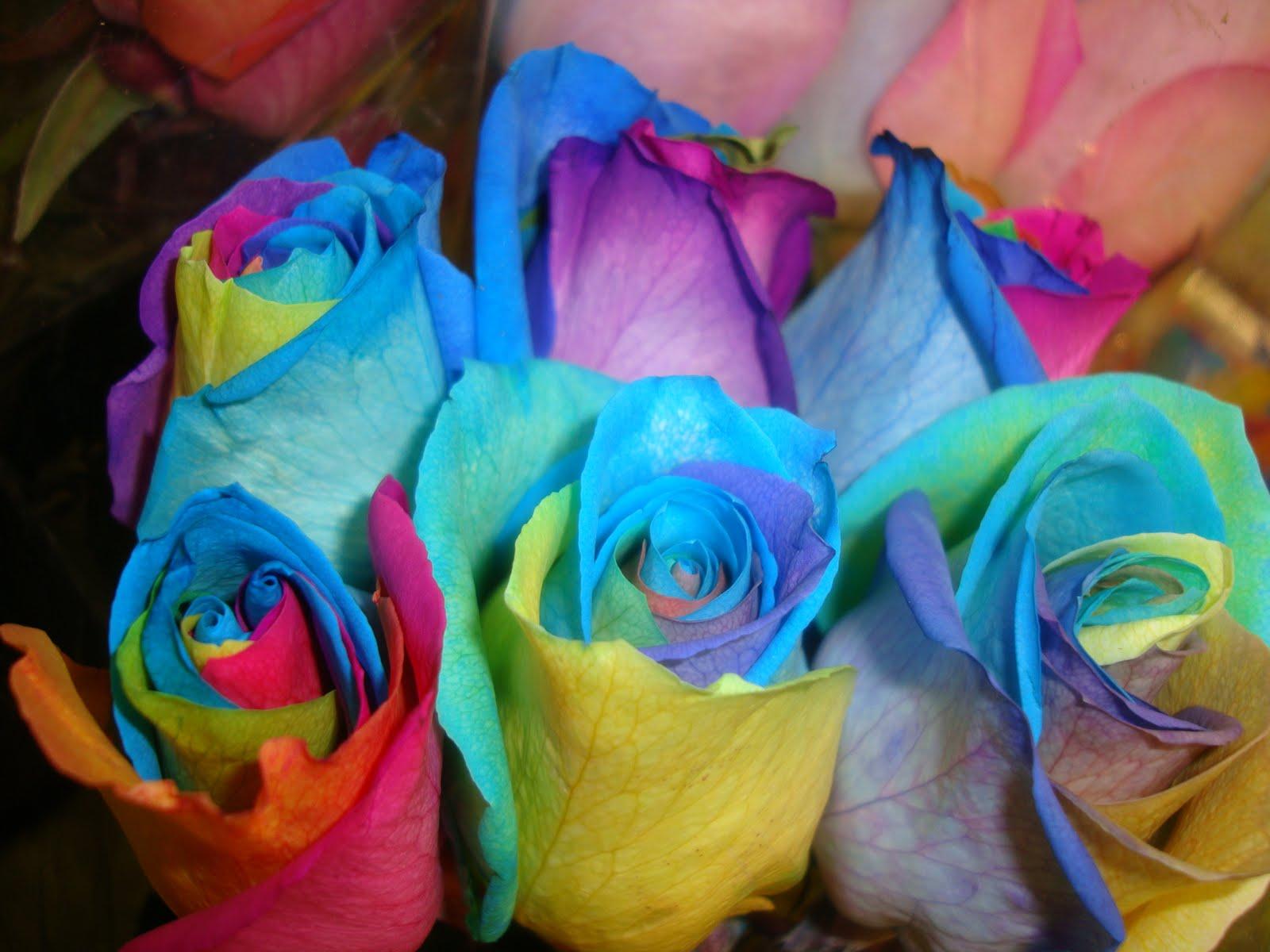 your birdie tie dye roses