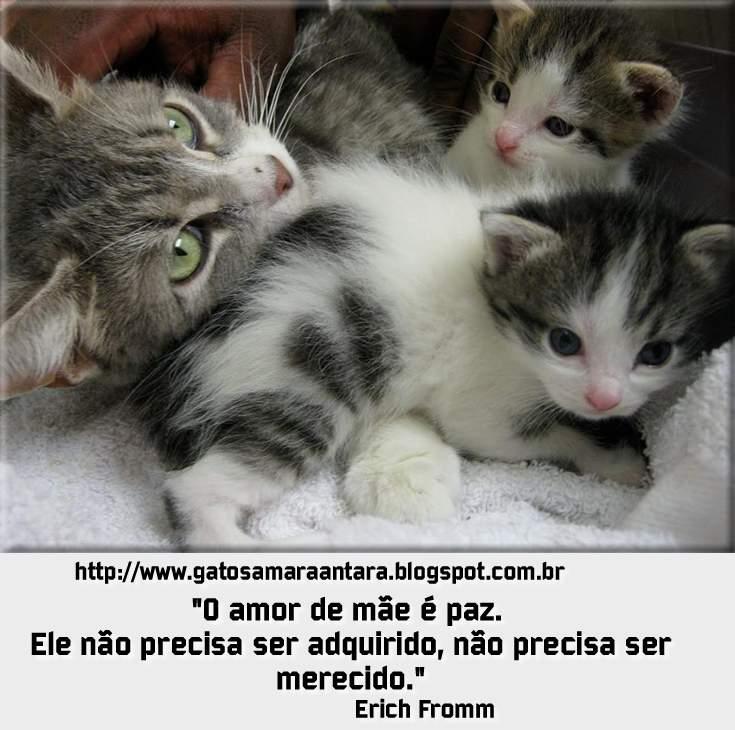 Gatos Amaraantara Gatos E Frases