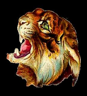 tiger image illustration vintage