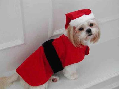 Bello+perro+navide%C3%B1o Imagenes chistosas de perros navideño