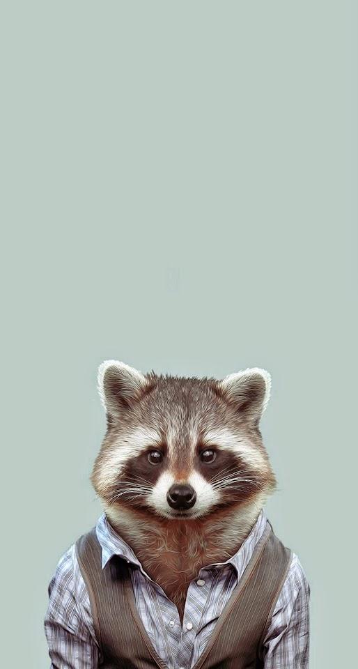Yago Portal Zoo Portraits Common Raccoon  Galaxy Note HD Wallpaper