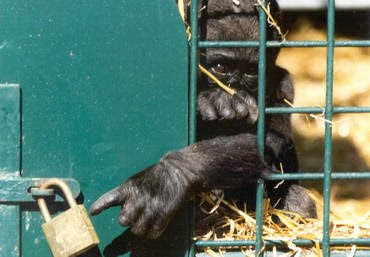 Pictures of Zoo Animals in Cages | Wallpaper Zone
