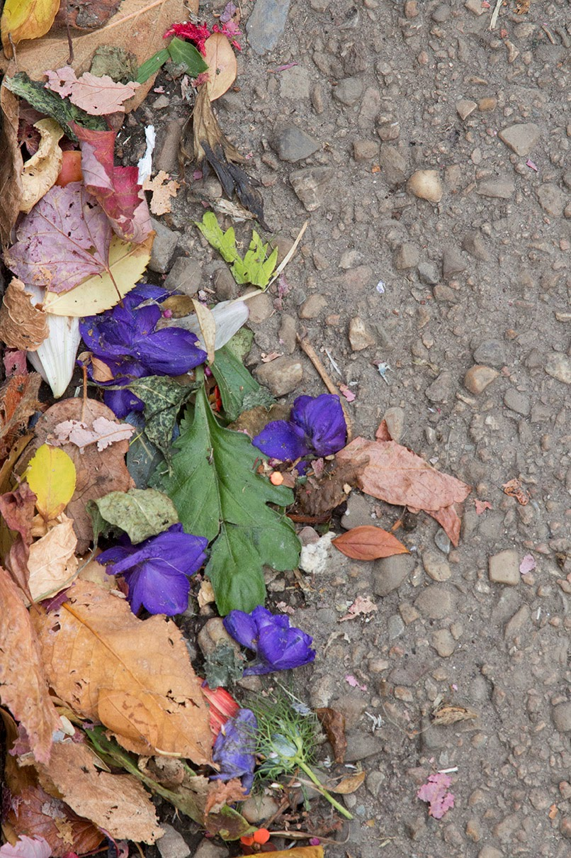 flowers in the gutter
