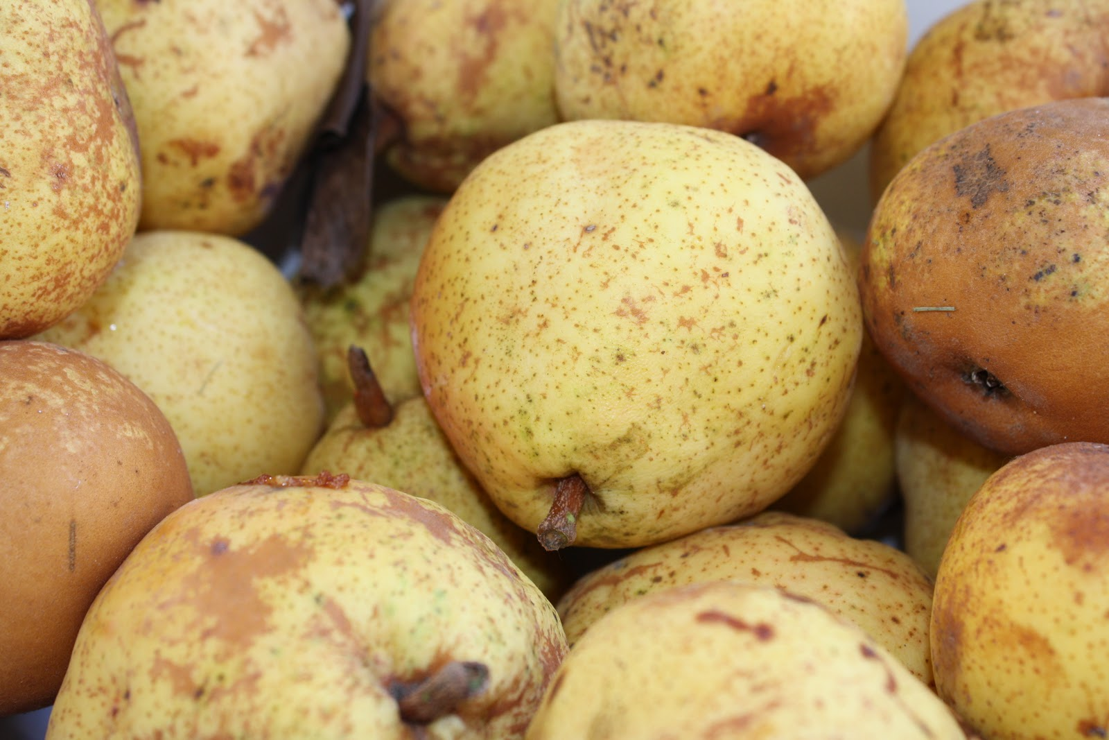 The Little Homestead: My Preserved Pears (Overflow Method)