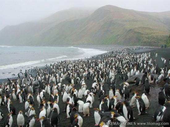 [Pict] Beberapa hal menakjubkan yang bisa ditemukan di Pasifik Selatan 8