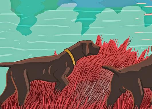 Perro y hierba
