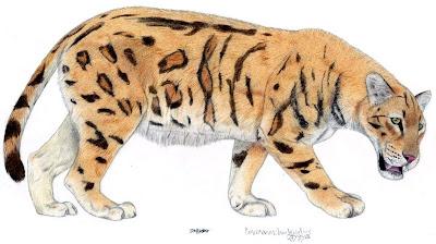 carnivora felidae Paramachairodus