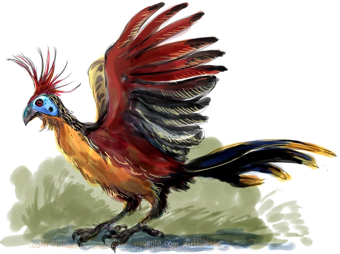 Birds: Hoatzin