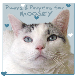 Please purr for Moosey