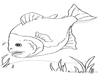 Realistic Piranha Fish Coloring Pages